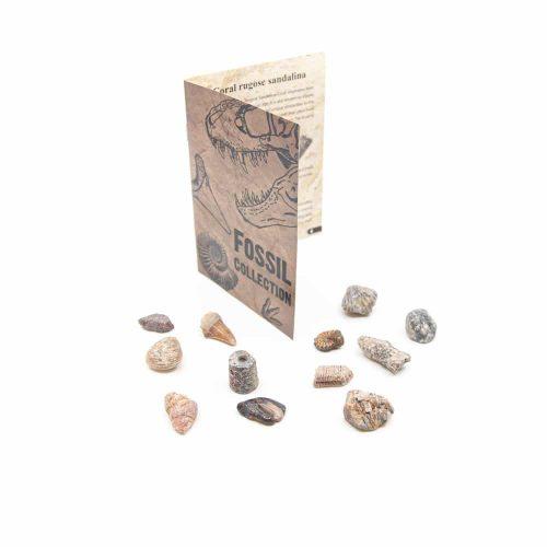 Fossiel Collectie - 12 stuks