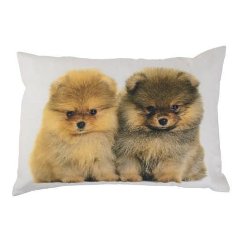 Sierkussen Canvas Pomeriaan Pups (50 x 35 cm)